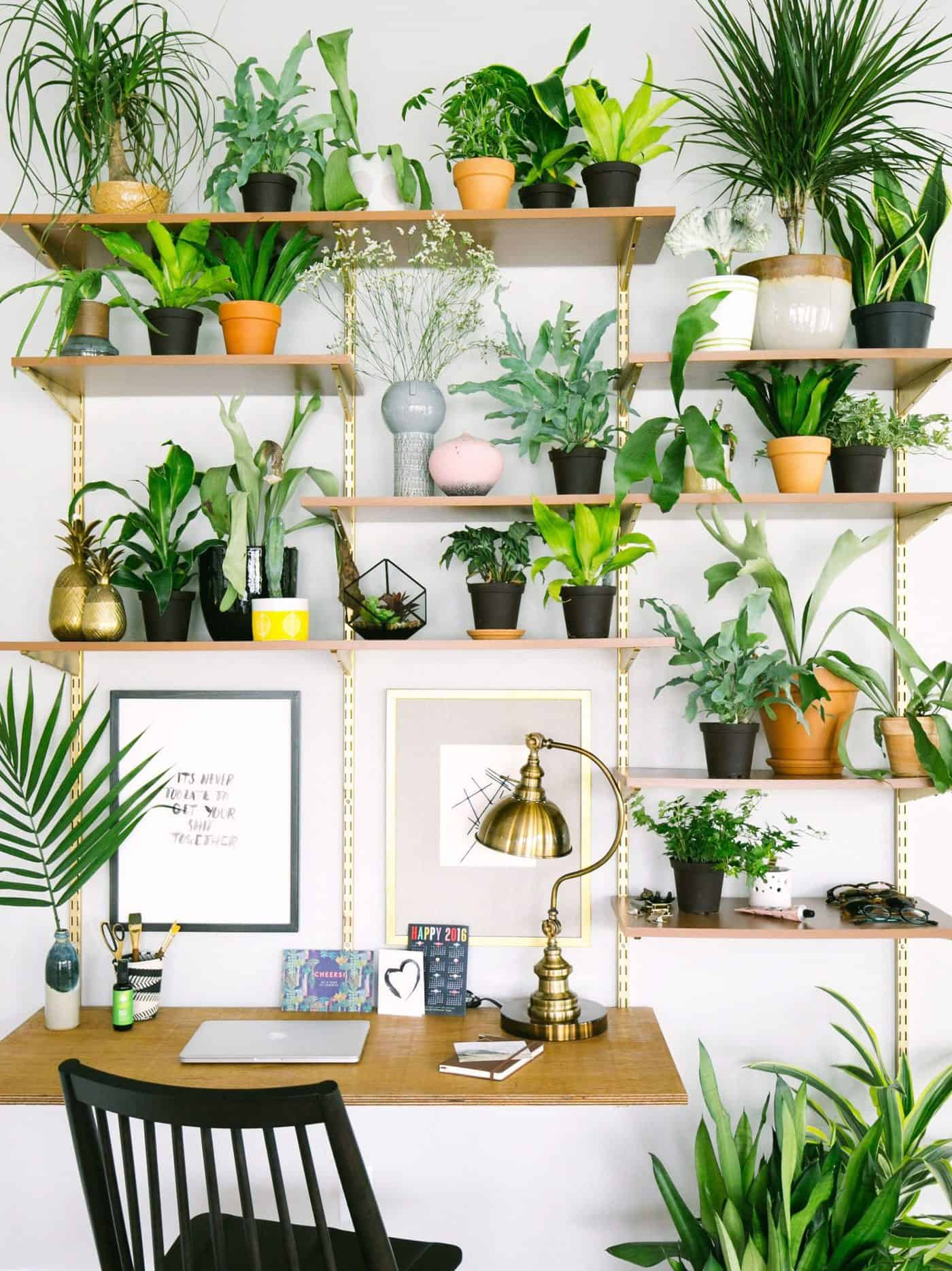 Home-Office-Plant-scaled